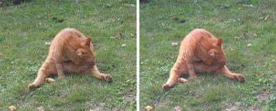 ストレッチ猫 交差法3D立体ステレオ写真