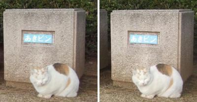 分別を見張る猫 平行法3Dステレオ立体写真