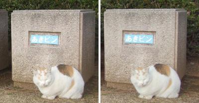 分別を見張る猫 交差法3D立体ステレオ写真