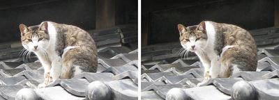 高知後免、屋根の猫 平行法3Dステレオ立体写真