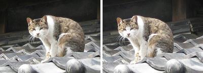 高知後免、屋根の猫 交差法ステレオ立体視3D写真