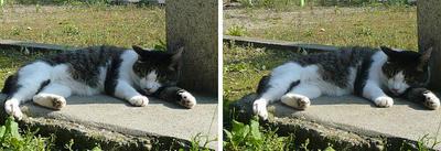 酔いつぶれたように寝ている猫 平行法3Dステレオ立体写真