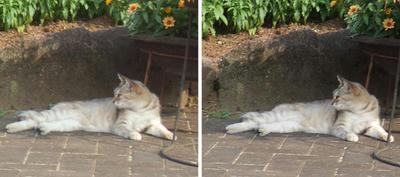 日陰で休む猫 平行法3Dステレオ立体写真