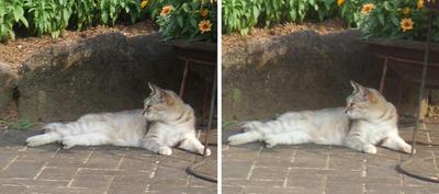 日陰で休む猫 交差法ステレオ立体視3D写真