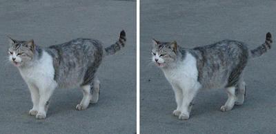 函館 埠頭にいた猫 平行法3Dステレオ立体写真
