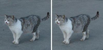 函館 埠頭にいた猫 交差法ステレオ立体視3D写真