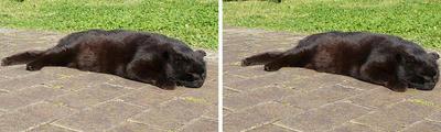 ヤル気無しの黒猫 平行法3Dステレオ立体写真