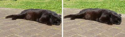 ヤル気無しの黒猫 交差法ステレオ立体視3D写真