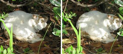 木陰猫 平行法ステレオ立体視3D写真