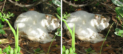 木陰猫 交差法3D立体ステレオ写真