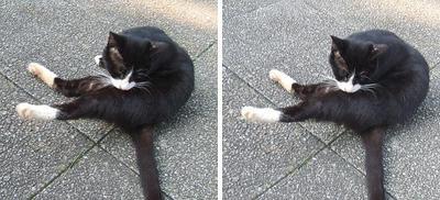 ストレッチ猫 平行法3Dステレオ立体写真
