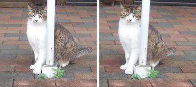 柱に笑い顔猫 交差法ステレオ立体視3D写真