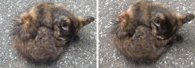 丸まる猫 平行法ステレオ立体視3D写真