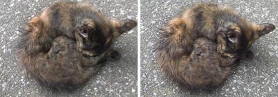 丸まる猫 交差法3Dステレオ立体写真
