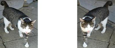 「何か、くれ!」猫 ミラー法3D立体ステレオ写真