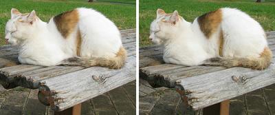 陶器の置き物のような猫 平行法3Dステレオ立体写真