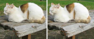 陶器の置き物のような猫 交差法ステレオ立体3D写真