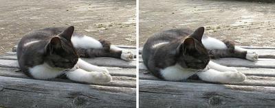 ノビ猫 交差法3Dステレオ立体写真
