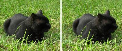 黒猫 平行法ステレオ立体3D写真