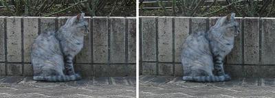 保護色猫 平行法ステレオ立体3D写真