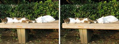 ひだまりでまったり猫 平行法3Dステレオ立体写真