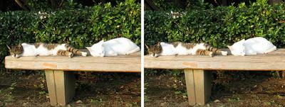 ひだまりでまったり猫 交差法3Dステレオ立体写真