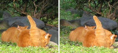 猫二匹で まったり 平行法3D立体ステレオ写真
