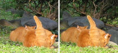 猫二匹で まったり 交差法ステレオ立体3D写真