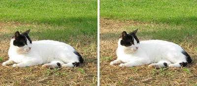 黒マスク猫 平行法3Dステレオ立体写真