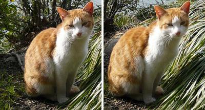 おすまし猫 交差法ステレオ立体3D写真