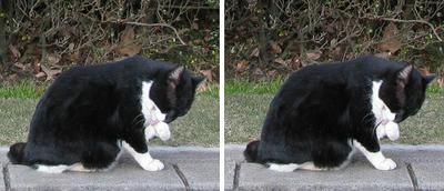 昭和記念公園の猫 平行法3Dステレオ立体写真