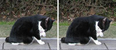 昭和記念公園の猫 交差法ステレオ立体3D写真