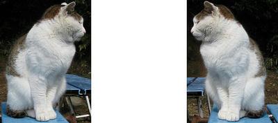 稲荷山(伏見稲荷)四ツ辻にいた猫 ミラー法3Dステレオ立体写真