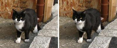 焼きイカ屋前にいた猫 平行法ステレオ立体3D写真