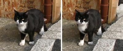 焼きイカ屋前にいた猫 交差法3Dステレオ立体写真