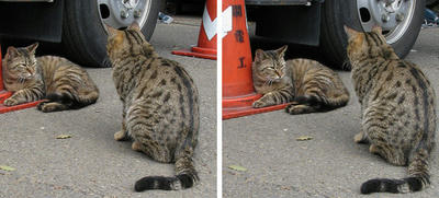 猫の二匹集会 平行法3Dステレオ立体写真