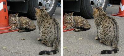 猫の二匹集会 交差法3D立体ステレオ写真