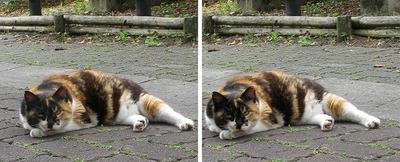 深川猫 交差法ステレオ立体3D写真