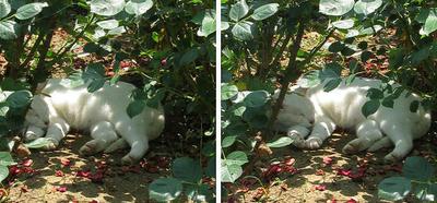草陰で寝る猫 平行法3Dステレオ立体写真