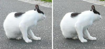 首を傾げる猫 平行法3Dステレオ立体写真