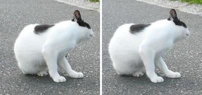首を傾げる猫 交差法3D立体ステレオ写真