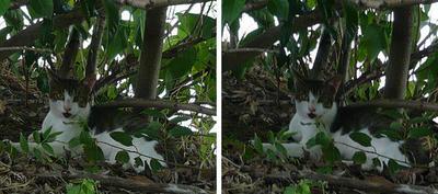 木立の中の猫 平行法ステレオ立体3D写真