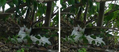 木立の中の猫 交差法3Dステレオ立体写真