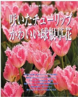咲いたチューリップかわいい球根草花