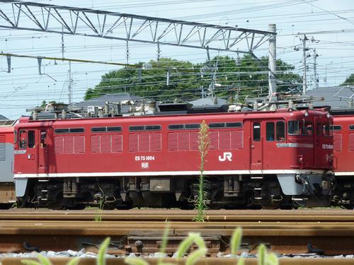 ED75 1004号機
