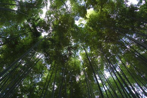 bamboobush