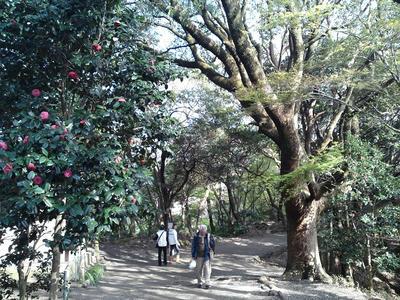 源氏山公園の山道
