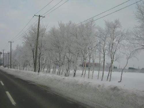 今日も霧氷