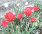 春の訪れを感じます。