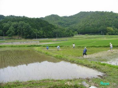 sirokaki2008.jpg